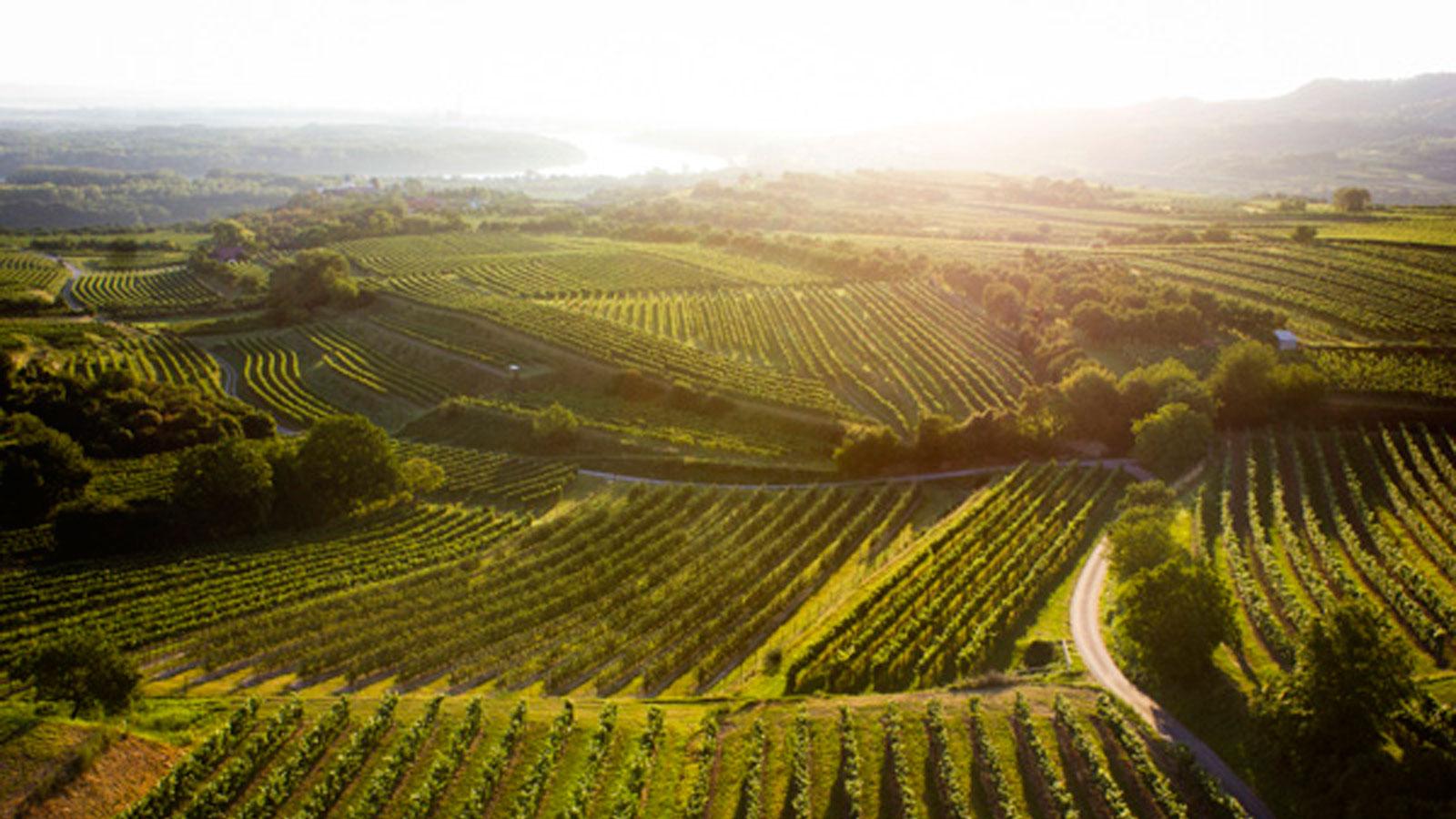 Weinbaugebiet Kamptal © POV/Robert Herbst