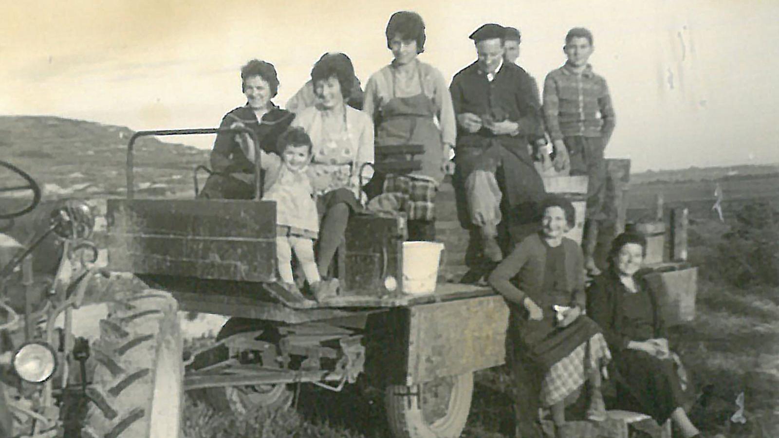 Die erste Ernte mit Traktor.