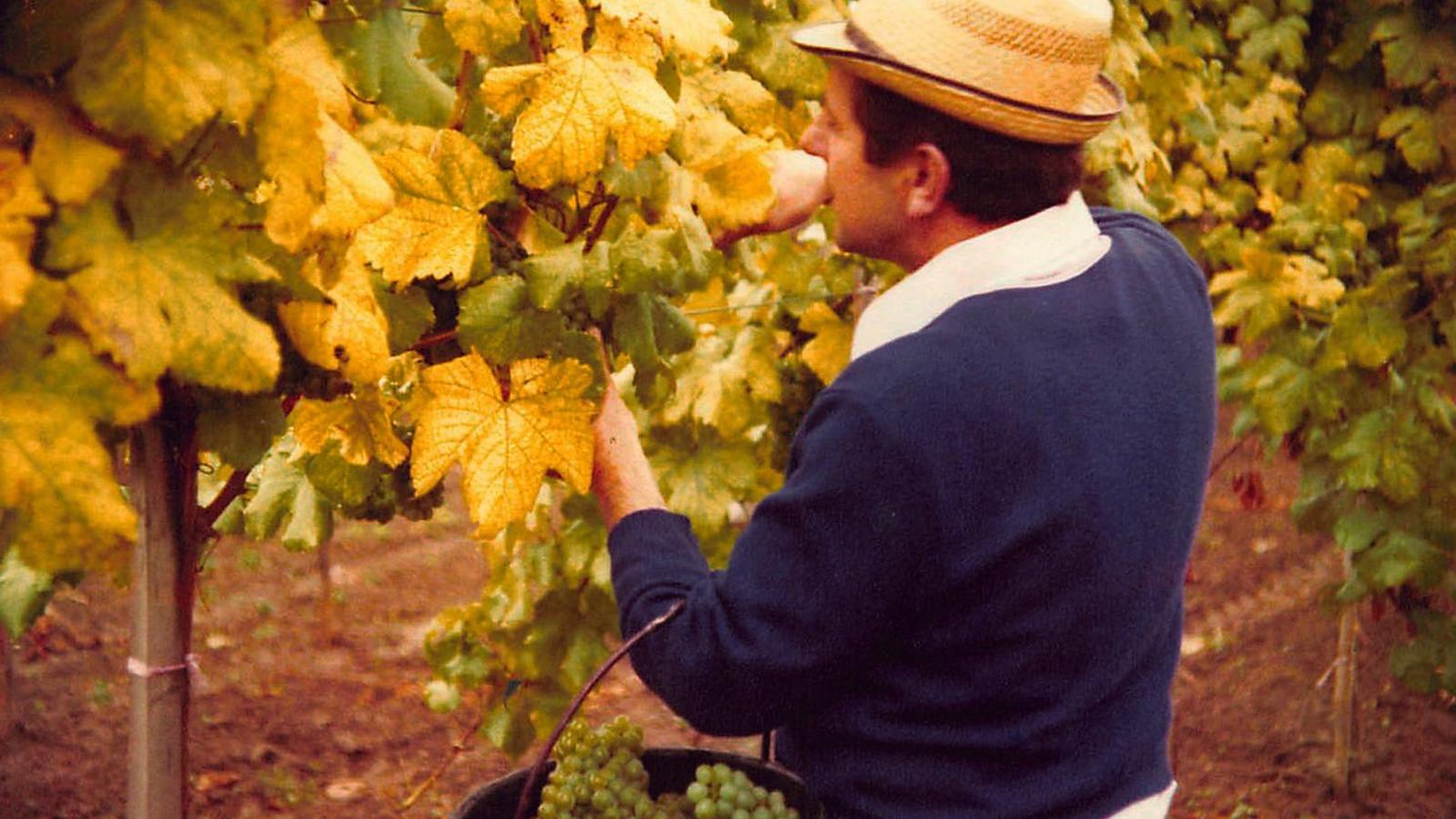 Arbeit im Weingarten