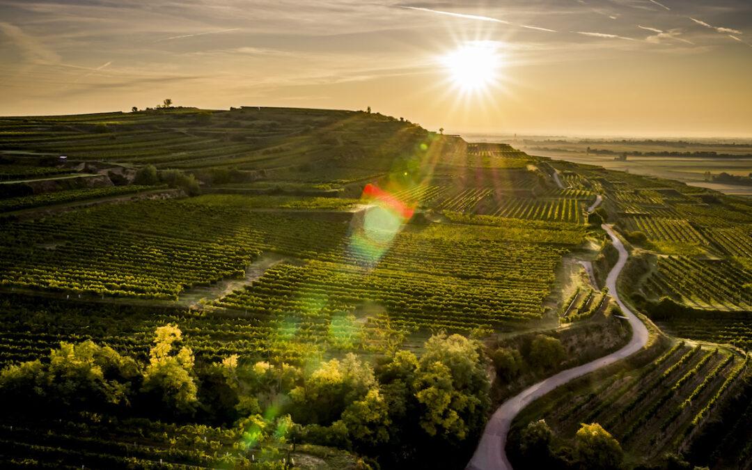 Vorschau auf den Weinjahrgang 2021